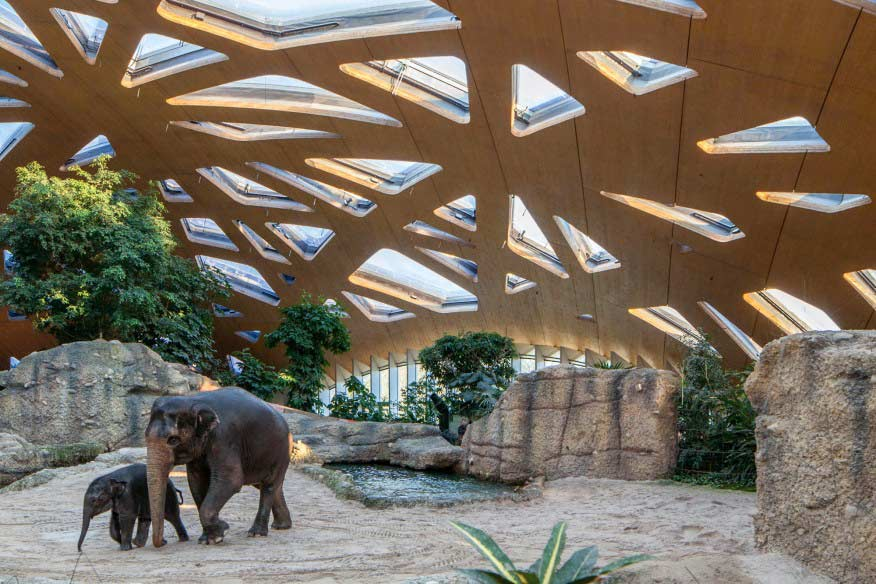 elephant park in zurich zoo - amazing place to visit in zurich